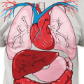 Vnitřní orgány lidského těla