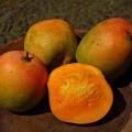 Ovoce mango
