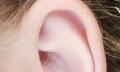 Bolest ucha