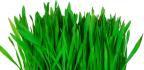 Zelené potraviny pro detoxikaci a uzdravení