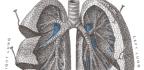 Akutní bronchitida
