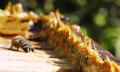 Jak odstranit skvrny od propolisu