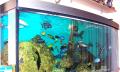 Sladkovodní akvarijní ryby