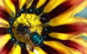 Včela