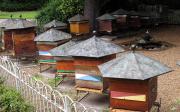 Chov včel