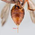 Bodnutí od hmyzu