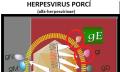 Herpes upsa