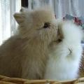 Oblíbená plemena zakrslých králíčků