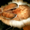 Ukázkové druhy králíků sezvláštní srstí